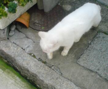 これはいつぞやの猫